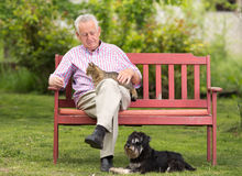 Senior man with dogs Royalty Free Stock Image