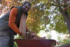 Senior man doing yard work in autumn Stock Images