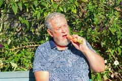Senior man eating a carrot. stock image