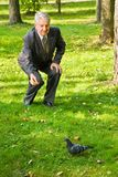 Senior man feeds dove in park Stock Images
