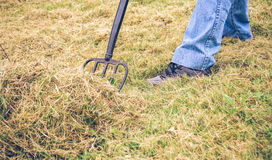 Senior man feet raking hay with pitchfork on field Royalty Free Stock Photography