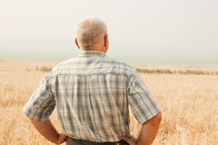 Senior man in field royalty free stock photo