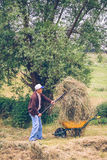 Senior man filling wheelbarrow of hay with Stock Images