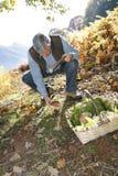 Senior man finding ceps Stock Photo