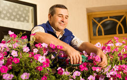 Senior man florist working in the garden. In the morning royalty free stock photo