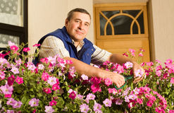 Senior man florist working in the garden. With flowers Stock Image