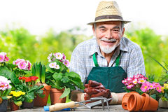 Senior man in the flower garden Stock Photo
