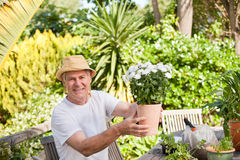 Senior man with flowers Stock Image