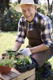 Senior man with fresh herbs Royalty Free Stock Photography