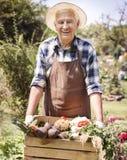Senior man with fresh vegies Royalty Free Stock Image