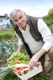 Senior man in garden picking up fresh vegetables Stock Image