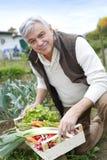 Senior man in garden picking up fresh vegetables Stock Image