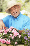 Senior Man Gardening Stock Photos