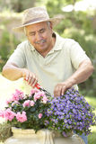 Senior Man Gardening Royalty Free Stock Image