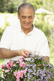 Senior Man Gardening Royalty Free Stock Photo