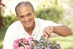 Senior Man Gardening. At Home Smiling Stock Photography