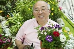 Senior man gardening. Holding flowers (portrait Royalty Free Stock Photography