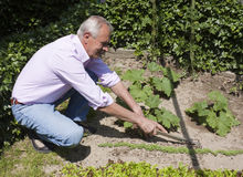 Senior Man Gardening Royalty Free Stock Photos