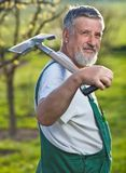 Senior man gardening in his garden Royalty Free Stock Images