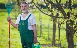 Senior man gardening in his garden Royalty Free Stock Photography
