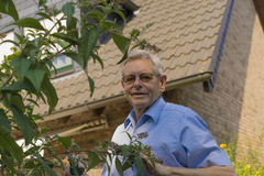 Senior man gardening at home. Standing on a stepladder looking down at the camera as he prunes the shrubs Royalty Free Stock Photography