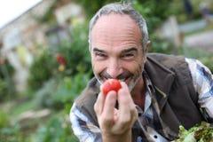 Senior man gardening tomatoes Stock Images
