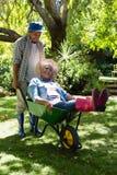 Senior man giving woman ride in wheelbarrow Royalty Free Stock Photos