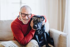 A senior man sitting on a sofa indoors with a pet dog at home, having fun. A senior man with glasses and a pet dog sitting on a sofa indoors at home, having fun stock photo