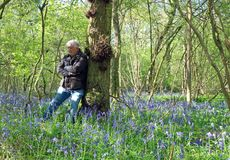Senior man happy and peaceful in a bluebell wood. Stock Photos