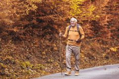 Free Senior Man Hiking In Autumn Forest Stock Images - 161217784