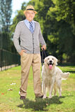 Senior man and his Labrador retriever dog in a park Royalty Free Stock Image
