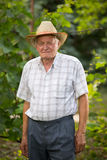 Senior man in his vineyard Stock Image