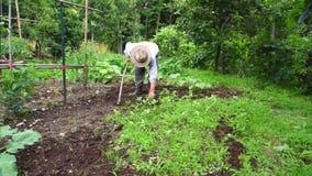 Senior man hoeing vegetable garden soil Royalty Free Stock Photography