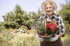 Senior man holding basket filled flowers royalty free stock photo