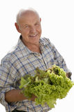 Senior man holding lettuce, cut out royalty free stock photo