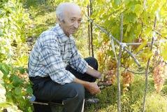 Senior man holding vine Royalty Free Stock Photo
