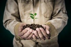 Senior man holding young plant Stock Photo