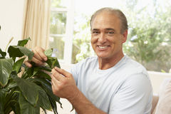 Senior Man Looking After Houseplant Royalty Free Stock Photos