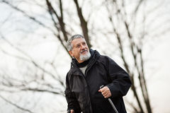 Senior man nordic walking, Royalty Free Stock Images