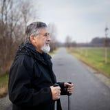 Senior man nordic walking, Royalty Free Stock Image