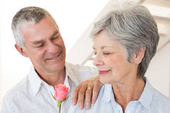 Senior man offering a rose to his partner Royalty Free Stock Photography