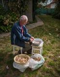 Senior man peeling pinto beans stock image