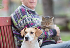 Senior man with pets Royalty Free Stock Photography