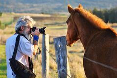 Senior man photographer photographing horse countryside sunset