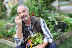 Senior man picking up fruits and vegetables Royalty Free Stock Image
