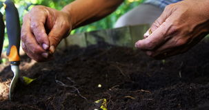Senior man planting seeds in the soil