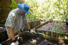 Senior man planting young plant into the soil. In garden Stock Photo