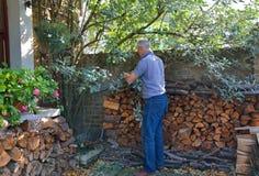 Senior man pruning shrub Stock Images