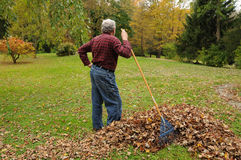 Senior Man Raking Leaves. Senior man resting from raking leaves looking out over the property royalty free stock images