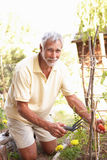 Senior Man Relaxing In Garden Stock Photography